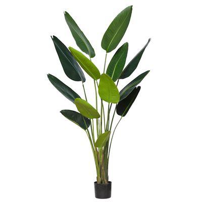 Giant Bird Of Paradise Plant Green 180cm