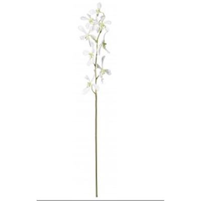 Spider Orchid Stem White