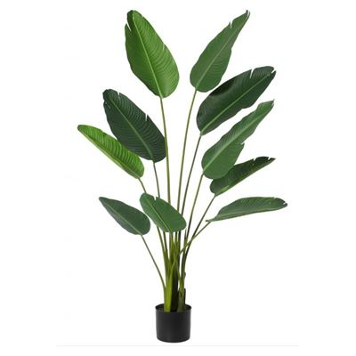 Giant Bird Of Paradise Plant Green 152cm