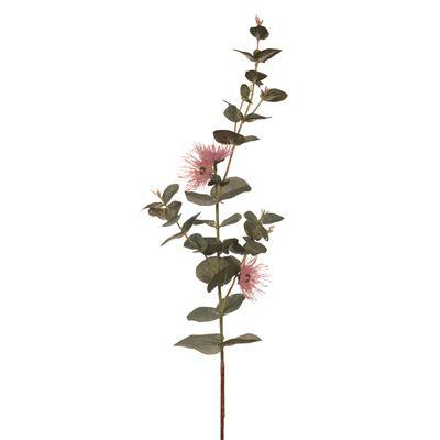 Eucalyptus Flowering Dollar Pink 76cml