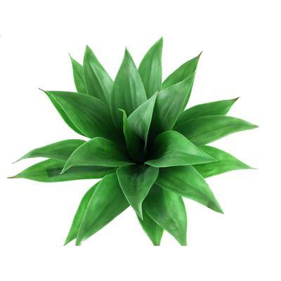 Agave Basic Green