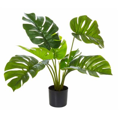 Monsteria Plant Green