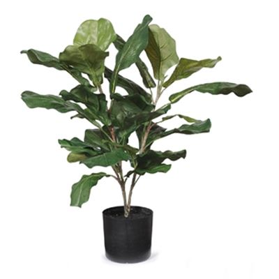 Fiddle Leaf Plant 55cm
