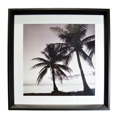 Palm Shadows Print with Black Frame