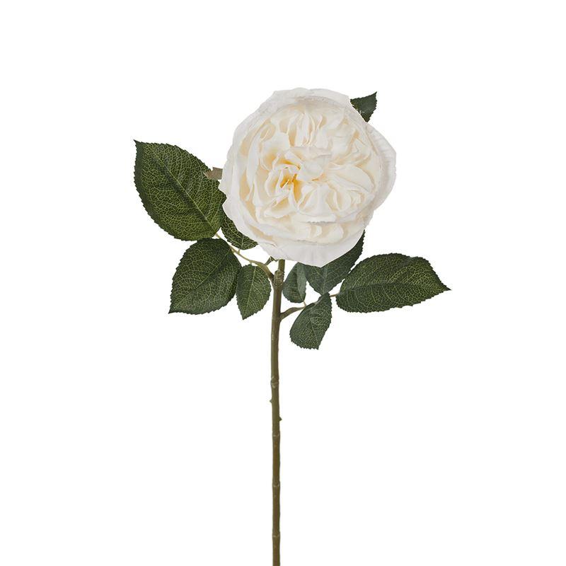 Rose Austin White