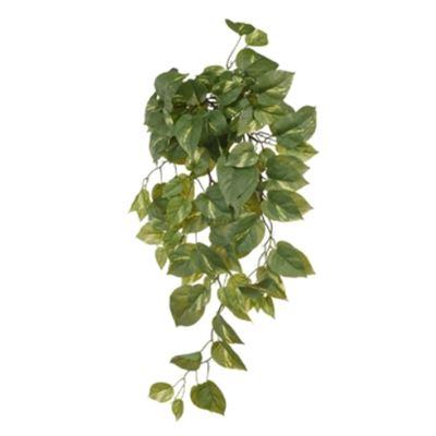 Pothos Hanging Bush Green 70cm
