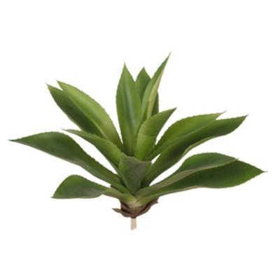 Agave Green 28cm