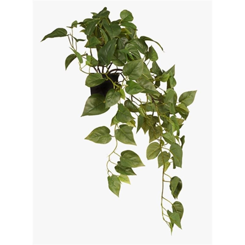 Philodendron in Pot Green 70cm