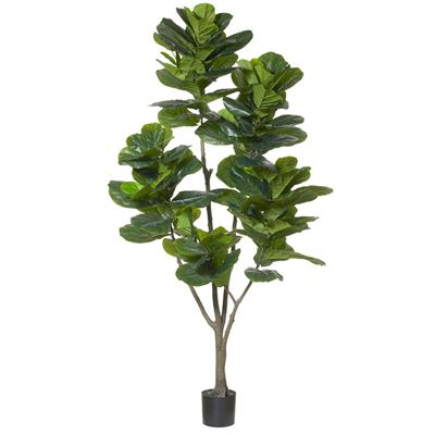 Giant Fiddle Tree 210cm Green
