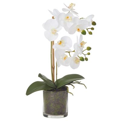 Butterfly Orchid with Moss Glass Pot 43cm White