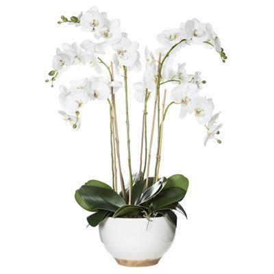 Deluxe Phalaenopsis-Athena Bowl 82cm White