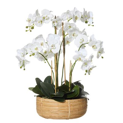 Deluxe Phal-Rohan Basket79cmWh-BOM
