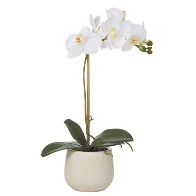 Butterfly Orchid Sandstone Pot 45cm White