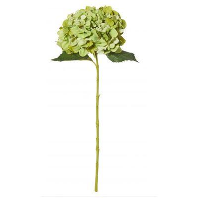 Hydrangea Stem 65cm Green