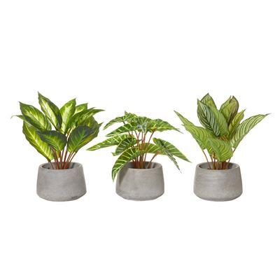 Indoor Plants -3 Assorted Plants