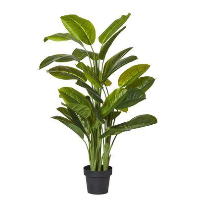 Evergreen Plant 130cm