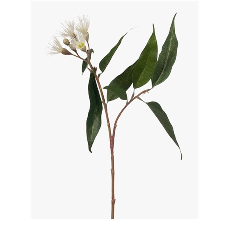 Eucalyptus Flowering Cream