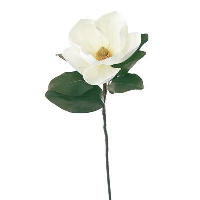 Magnolia White 78Cml