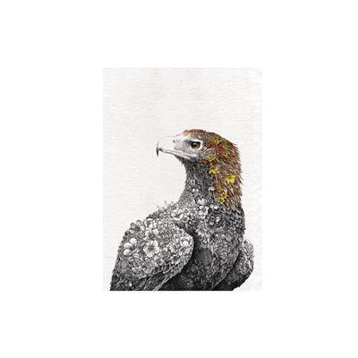 Marini Ferlazzo Birds Tea Towel 50x70cm Wedgetail Eagle