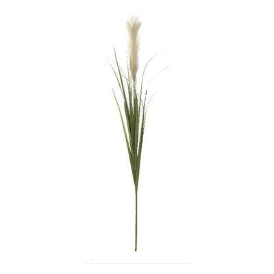 Pampas Stem White/Green 120cm
