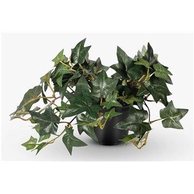 Ivy Sage Hanging Bush in Pot Green 30cml