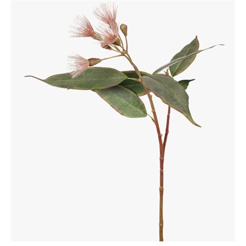 Eucalyptus Flowering Pink 53cml