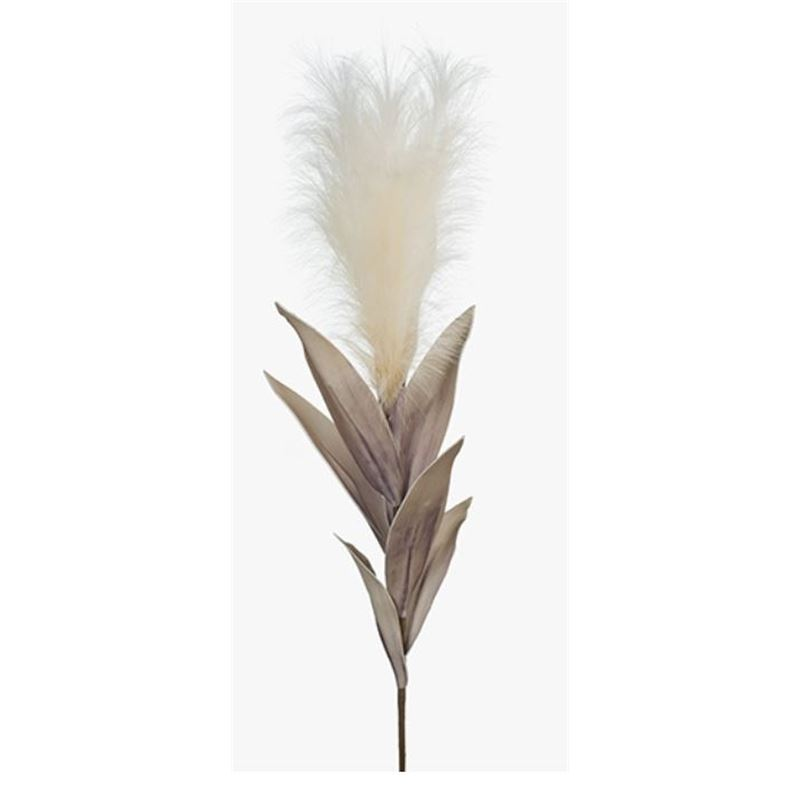 Pampas Grass Cream 113cml