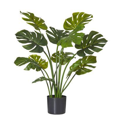 Monsteria Plant Garden Pot Green/Black