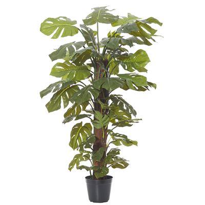 Monsteria Totem Plant Garden Pot Green