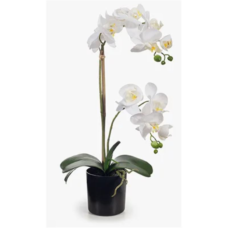 Orchid Phalaenopsis in Pot White 50cm