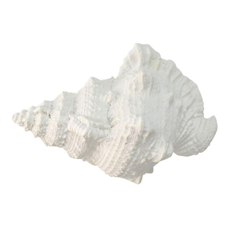 20x11x13cm White Poly Sea Snail Shell