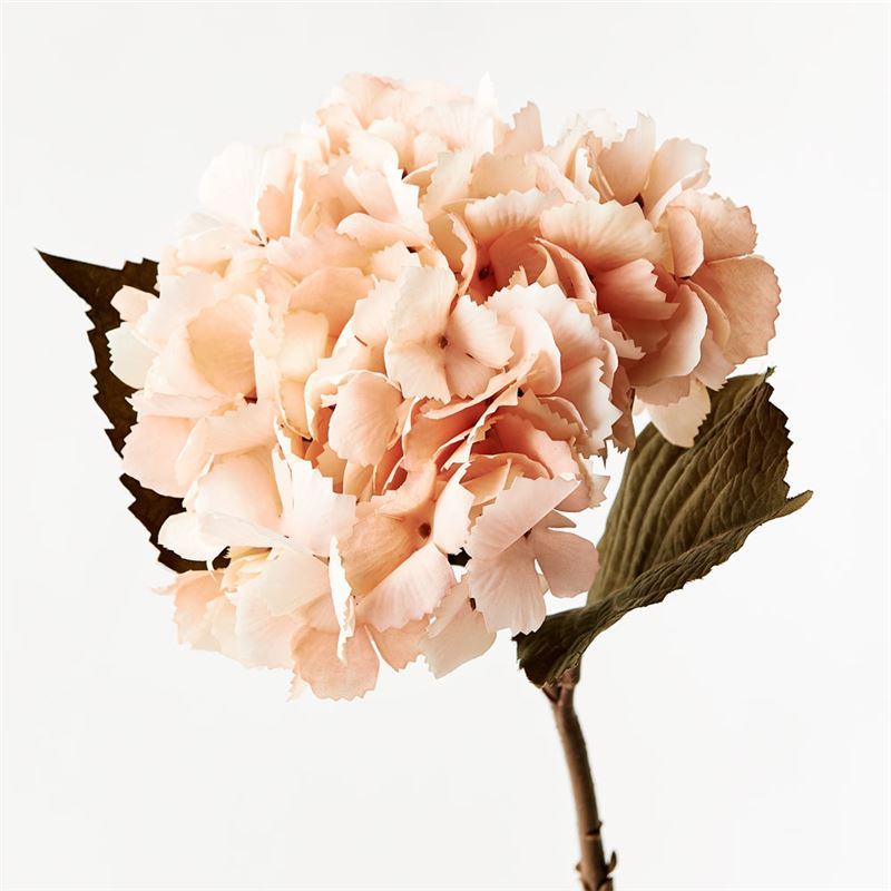 Hydrangea Peach 43cml