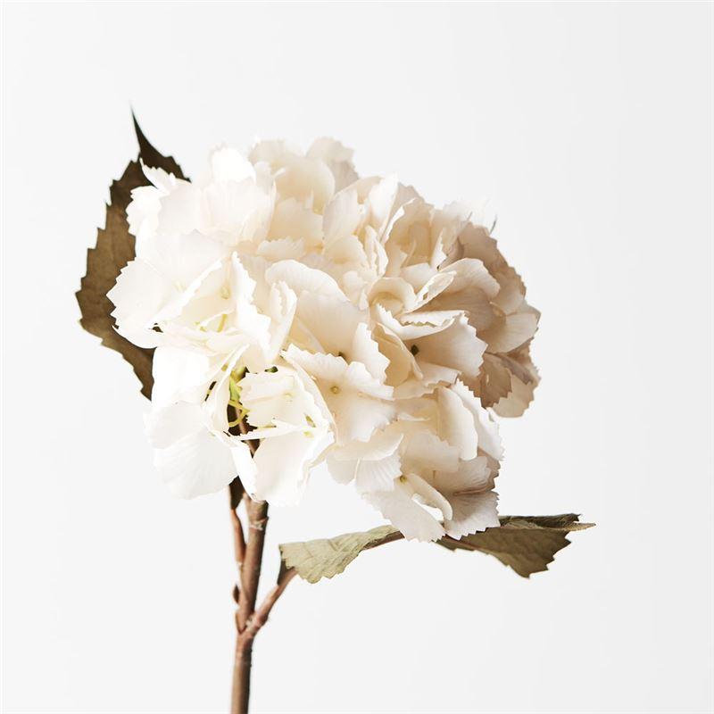 Hydrangea White 43cml