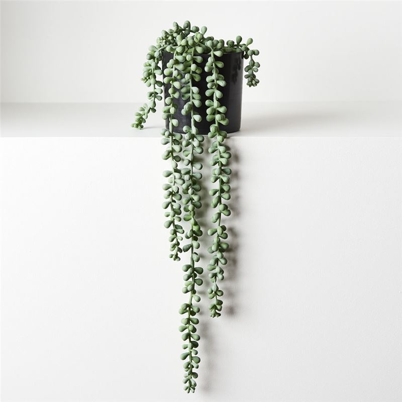 String of Pearls in Pot Grey Green 45cml