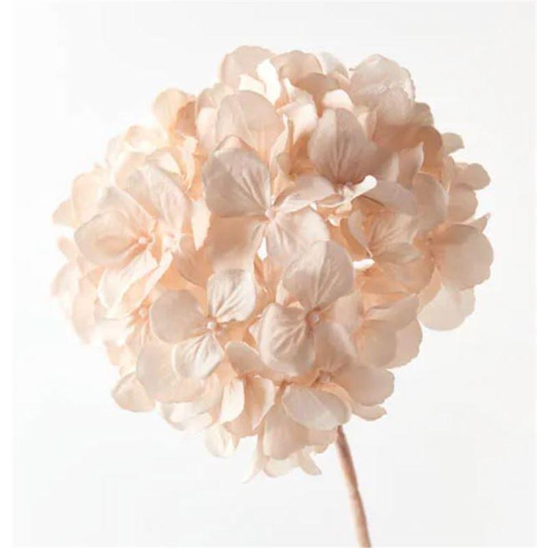 Hydrangea w/o Leaf Champagne 46cml