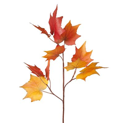 Maple Leaf Branch Orange 91Cml