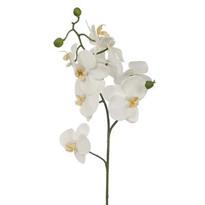 Orchid Phalaenopsis Fresh Touch White 61Cml
